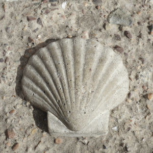 shell-closeup